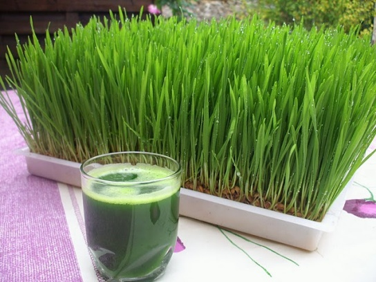http://botanicalnutrition.files.wordpress.com/2012/01/wheat-grass-juice1.jpg