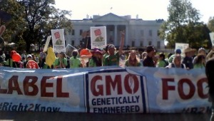gmo protest chicago